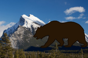 Banff Grizzly
